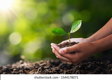 hand holding young plant for planting. concept green world