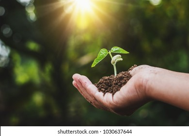 hand holding young plant with sunslight. concept ecology
