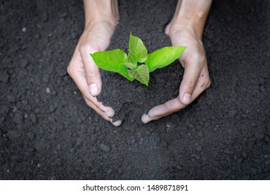 hand holding young tree for planting. concept eco earth day, hand holding young tree for planting. concept eco earth day.
