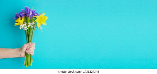 hand holds bouquet of daffodils and irises on blue background. Birthday, March 8 Women's Day, love and congratulatory concept. banner wit copy space for text