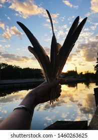 A hand holds up a collection of large feathers up to the sky at sunset on a beautiful summer night next to a canal.
