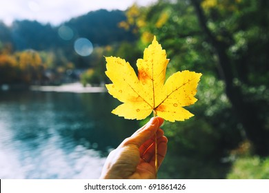 Hand holds maple yellow leaf on the background of Bled Lake, Slovenia. Autumn background.