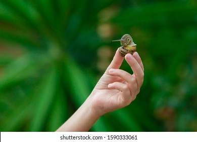 The hand holds a small snail at fingertips. Green garden on a background.