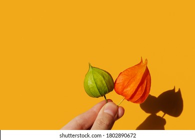 Hand holds two physalis flowers. Horizontal banner, poster with copy space to advertise autumn sale. Nature, organic design. Green, orange colors. Vibrant yellow background, hard sunlight, dark shadow