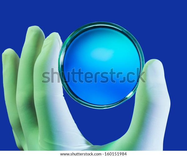hand in latex gloves holding Petri dish on blue