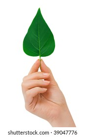 Hand with leaf isolated on white background