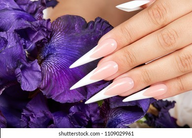 Hand with long artificial french manicured nails and a purple Iris flower
