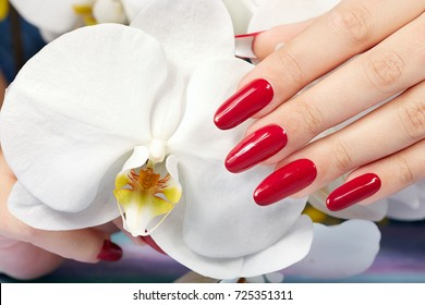Hand with long artificial manicured nails colored with red nail polish and white orchid flower