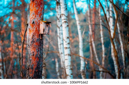 Hand made wooden birdhouse on tree in the forest