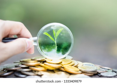 Hand with magnifying glass and money coins stack growing on green and sunlight background.Business investment growth concept, money saving. Investment concept. retirement concept.