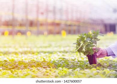 Hand of male biochemist holding seedling in plant nursery