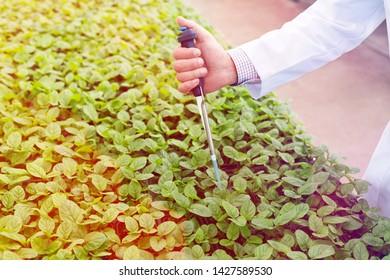 Hand of male biochemist using pipette on seedlings in plant nursery