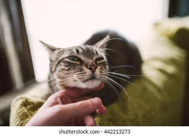 Hand of a man caress his beautiful tabby cat at home