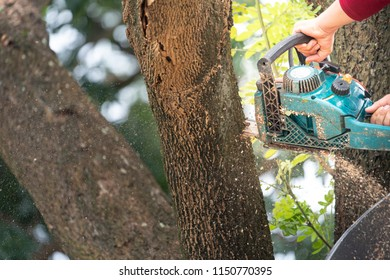 Hand of a man with a chainsaw is sawing a tree