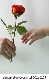 The hand of a man of the European race stretches out flowers, the woman's hand is outstretched to take the flowers