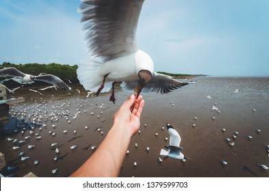 hand man feeding seagull bird with food flying on sky at summer in Bang pu Thailand.