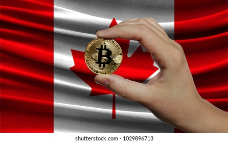 Hand of a man with a gold bitcone Cryptocurrency Digital bit of coins in a hand on a background of the flag of Canada.