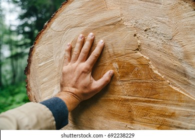 The hand of man touches the trunk of a felled tree with annual rings. Man and ecology.