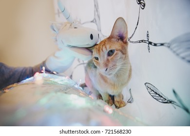 hand of a man in a unicorn toy glove playing with a orange shy cat with bright New Year's lights