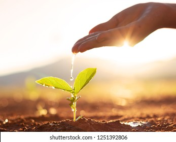 Hand nurturing and watering young baby plants growing in germination sequence on fertile soil at sunset background