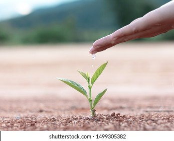 Hand nurturing and watering young baby plants growing in germination sequence on fertile soil nature background