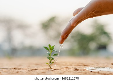 Hand nurturing and watering young baby plants growing in germination sequence on fertile soil