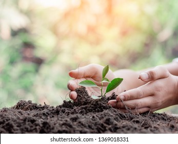 Hand nurturing young baby plants growing in germination sequence on fertile soil
