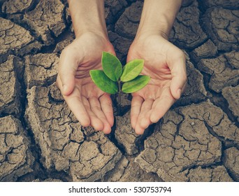 Hand nurturing a young green plant growing on dried, cracked ground - protect nature concept