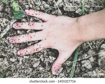 hand on the ground covered with ants