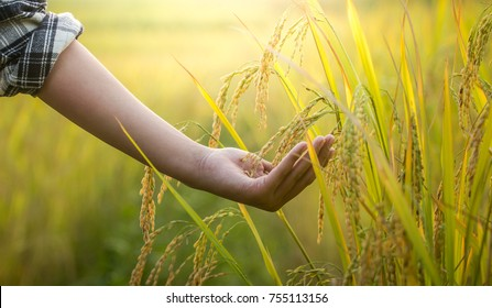 hand on rice field