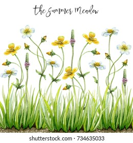 Hand painted watercolor wildflowers. Green grass. Summer meadow.