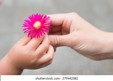 Hand to pass the daisies