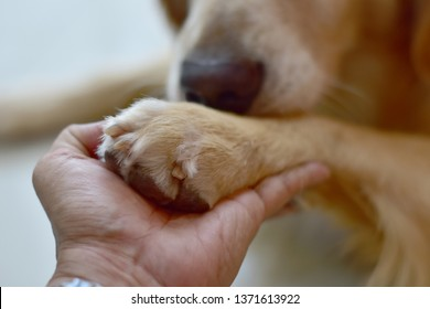 hand and paw of a big dog, a handshake with a pet. Friendship between human and dog.