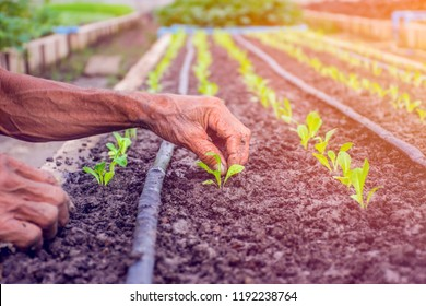 hand of person holding abundance soil with seedling plant in han