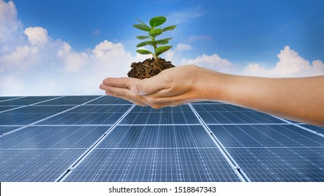 Hand of person holding the tree  on the nature background for solar energy,idea concept.