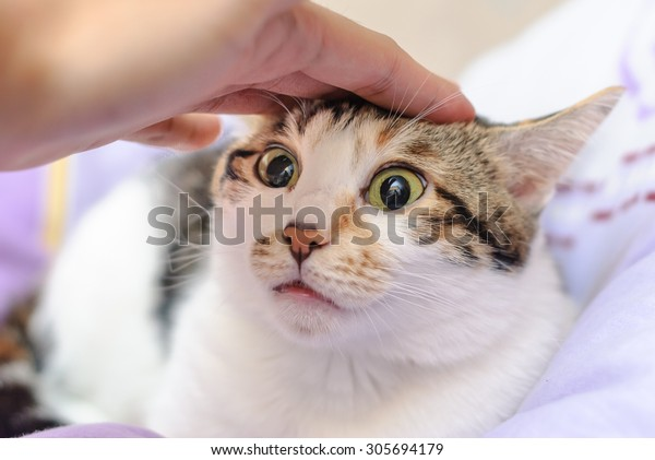 Hand of person stroking head of cute cat