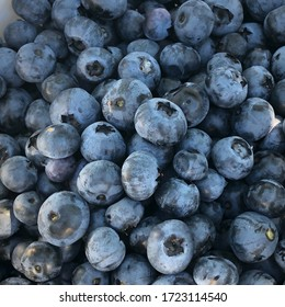 Hand picked blueberries in Florida