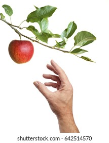 Hand picking an apple from an apple-tree. Isolated on a white background