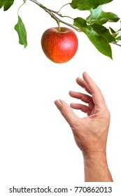 Hand picking an apple on a branch. Isolated on a white background