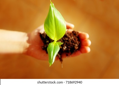 Hand and plant. enviroment concept. Blur background.