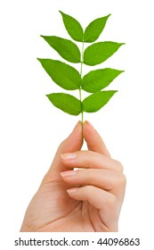 Hand with plant isolated on white background