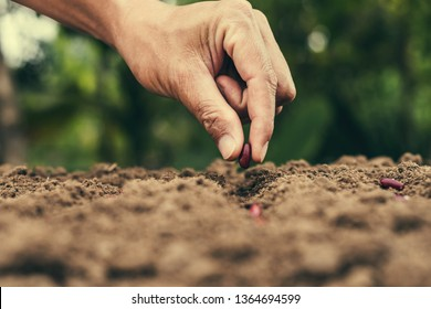 hand planting bean seed in the vegetable garden and light warm. agriculture concept