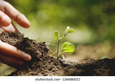 hand planting in garden. earth day concept
