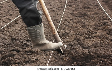 hand planting potato into the ground