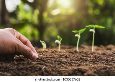 hand planting seeding growing step in garden with sunshine