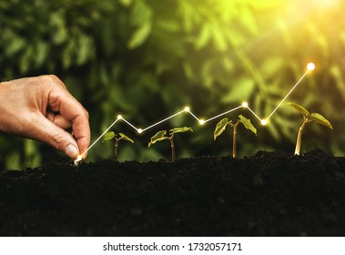 Hand planting seedling growing step in garden with sunshine. Concept of business growth, profit, development and success. - Shutterstock ID 1732057171