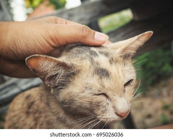 Hand playing cat