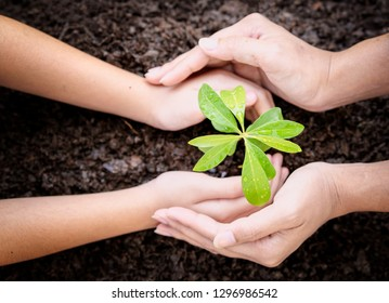 Hand protect new leaf on the ground,hand nurturing and watering young baby plants growing,helping,support,care concept.