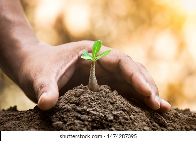 A hand protecting plant growing on soil for sustainability. Protect nature or environment concept