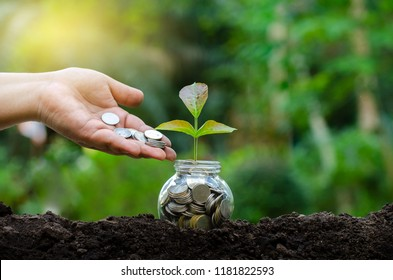 hand Put money Bottle Banknotes tree Image of bank note with plant growing on top for business green natural background money saving and investment financial concept